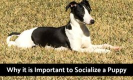 Why it is Important to Socialize a Puppy