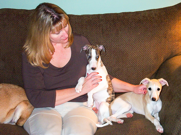 Woman and whippet puppies on a couch.