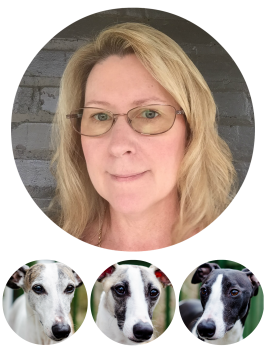 Faces of a woman and 3 whippet dogs