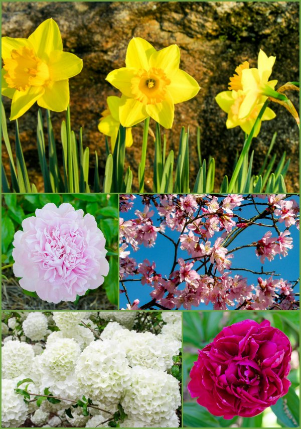 Spring flowers are one of the best things of the season. These are some favorites. #flowers #spring