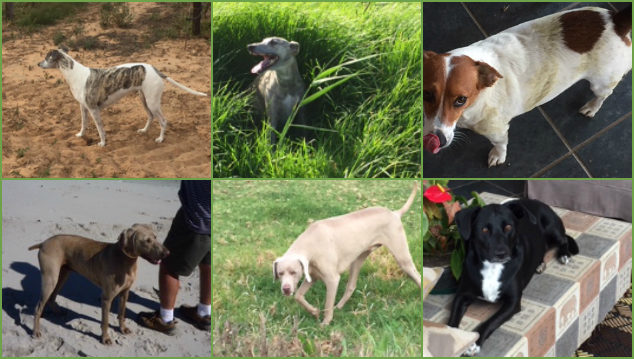Photo collage of six dogs