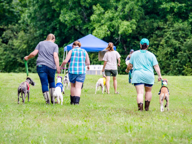 People walking whippets to a race start box.