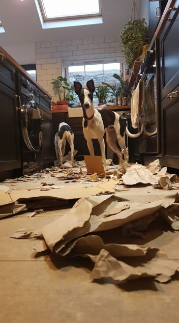 Whippet dogs destroyed recycling bin items.