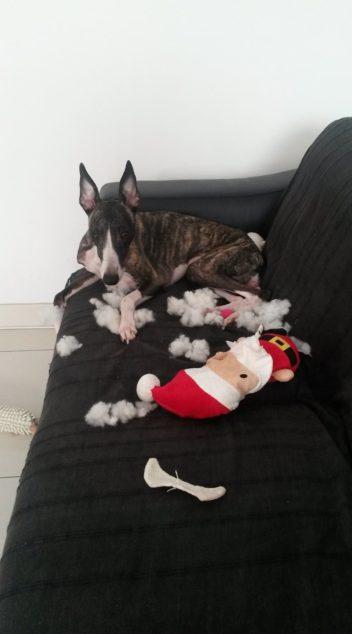 Whippet dog destroyed Santa toy.