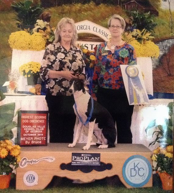 Digger, an obedience winner whippet dog.