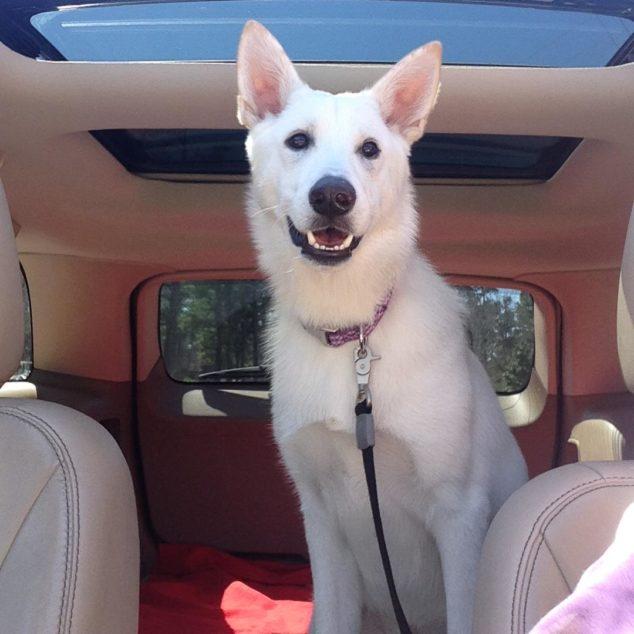 A White German Shepherd dog named Pawley.