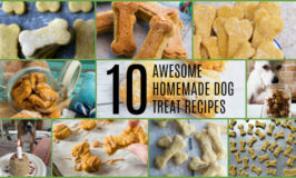 10 awesome homemade dog treats photo collage.