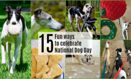 15 fun ways to celebrate National Dog Day collage