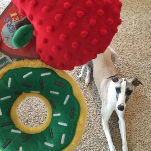 New dog toys and whippet dog.