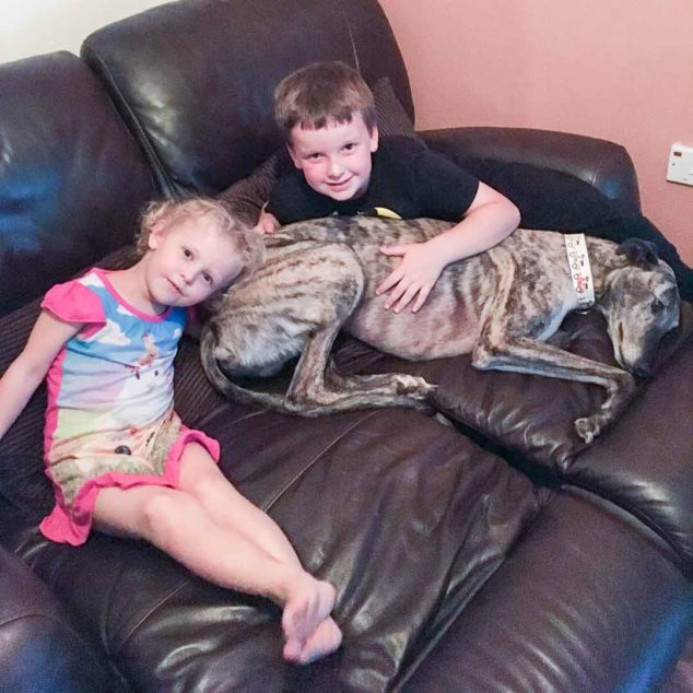 Greyhound dog on couch with children