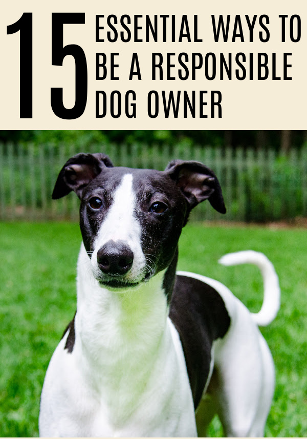 15 Essential Ways to be a Responsible Dog Owner. #Dogs