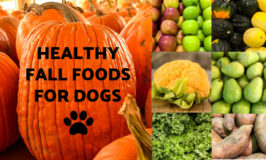 Fall foods for dogs collage