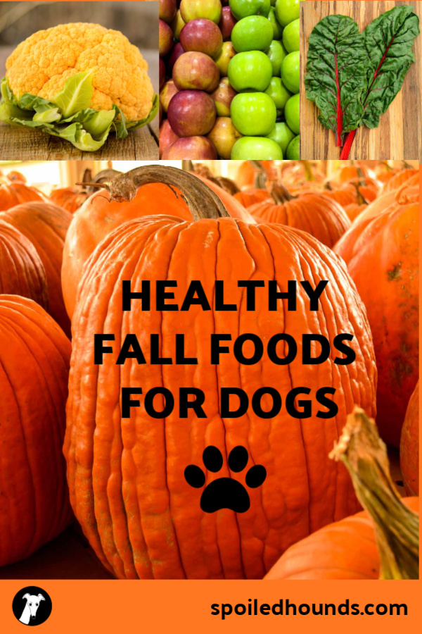 Healthy Fall Foods for Dogs photo collage