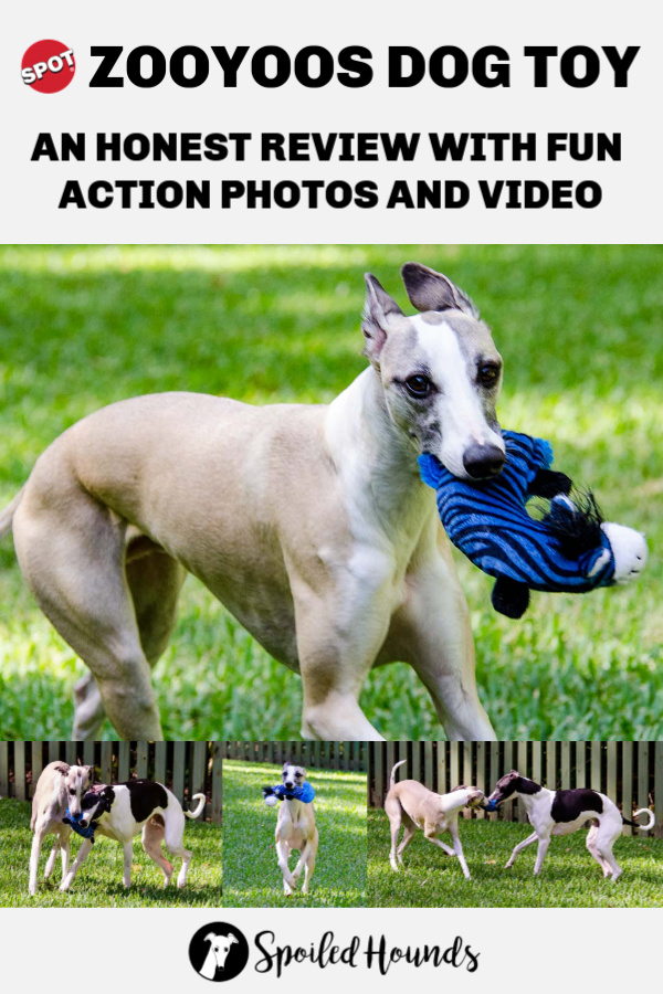 An honest review of the Spot ZooYoos Dog toy with fun photos and video.