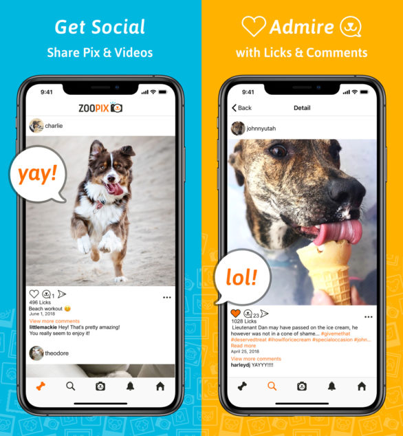 ZooPix Pet App Social Feed Screenshots