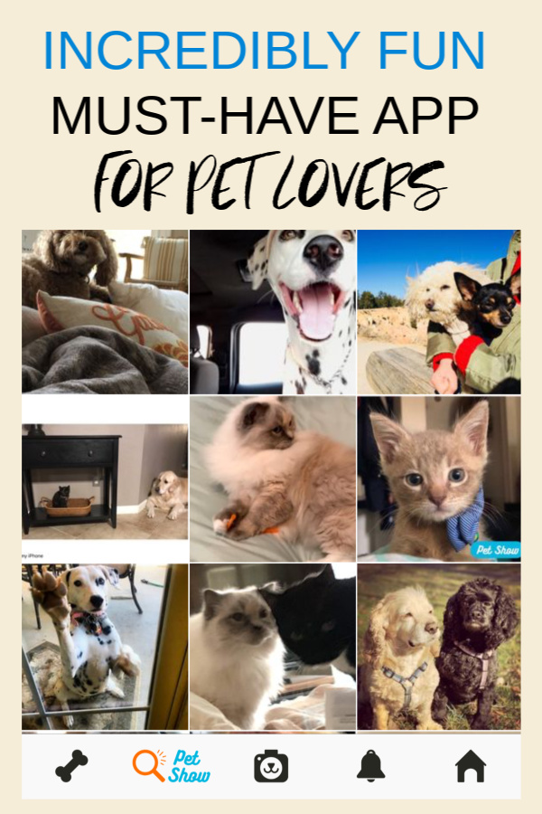 Collage of photos of pets