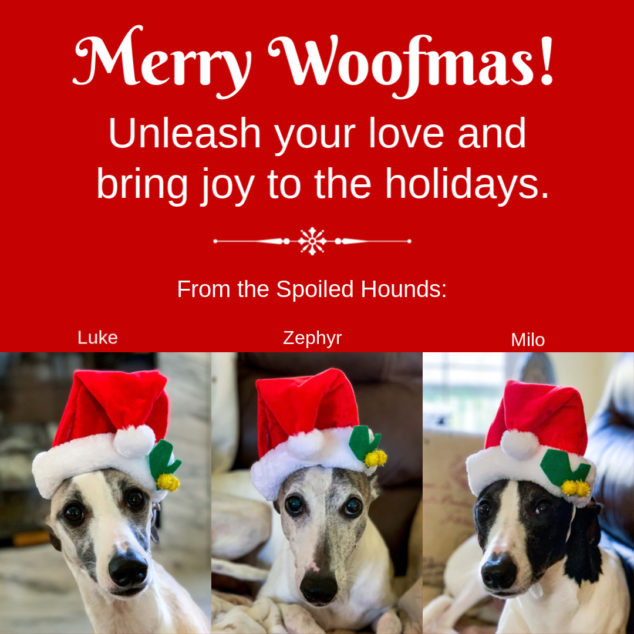 Three whippet dogs wearing Christmas hats.