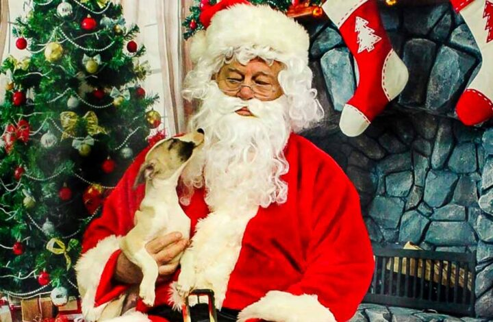 Puppy sitting on Santa's lap