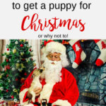 Puppy with Santa with text