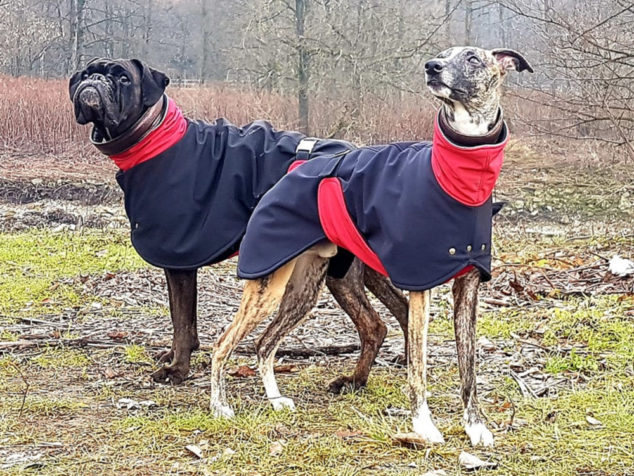 Two dogs wearing matching dog coats