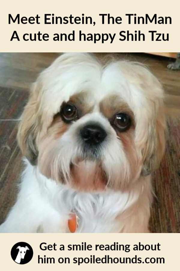 Shih Tzu dog with text