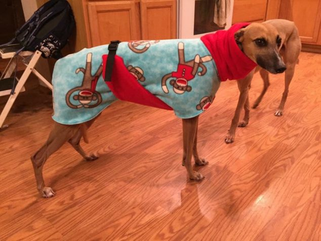 Whippet wearing a dog coat with monkey characters on it
