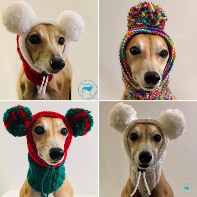 Four whippets wearing dog pompom snoods