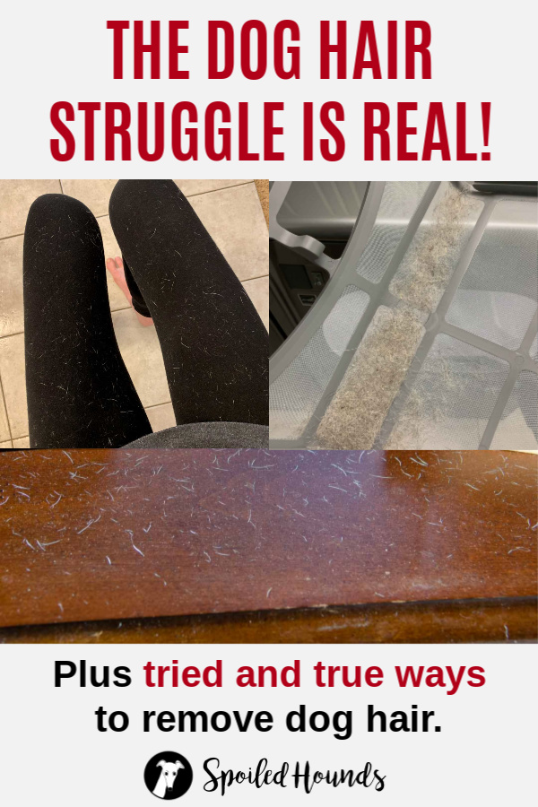 Collage of photos with dog hair on clothing and furniture