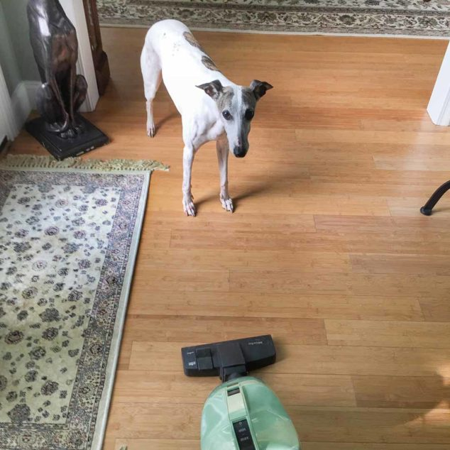 Dog looking at a vacuum cleaner
