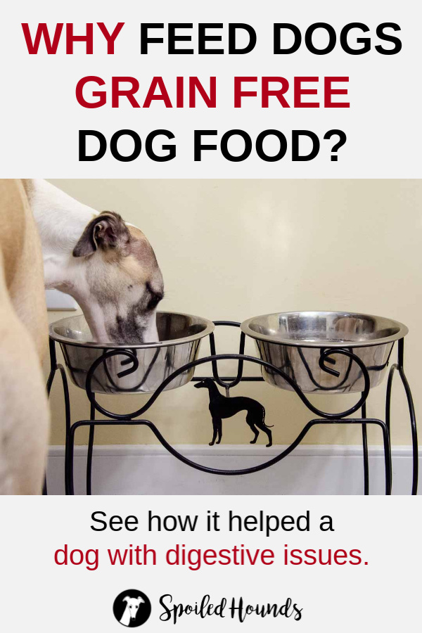 Dog eating from a raised feeder with text above and below the photo