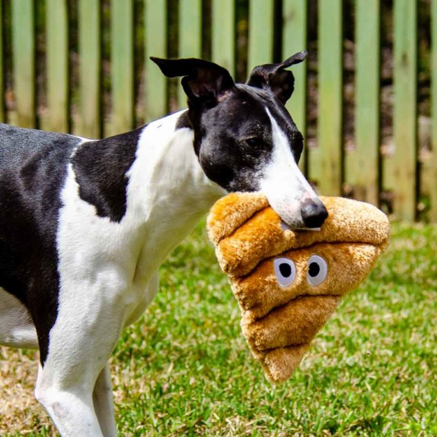Black and white whippet dog holding a poop emoji toy in its mouth.