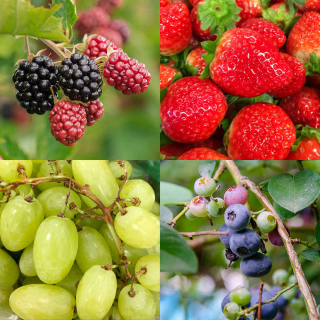 Collage of blackberries, strawberries, grapes, and blueberries