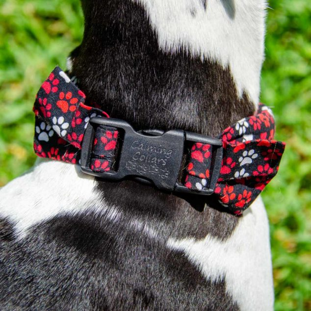 Herbal calming collar on a black and white dog's neck.