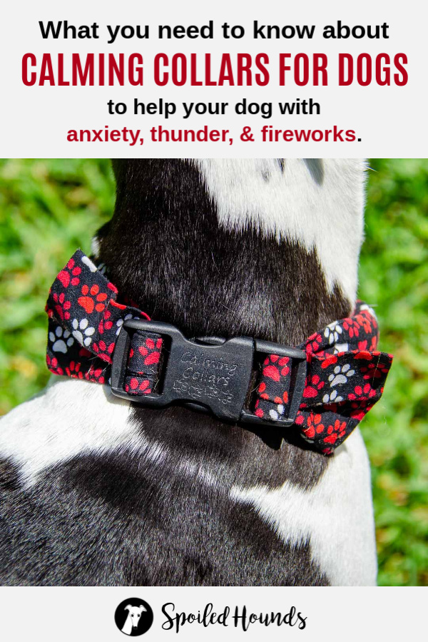 Black and red paw prints herbal calming collar on a black and white dog.