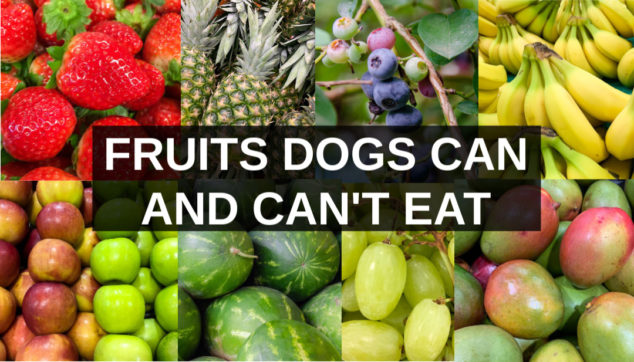 Collage of fruits dogs can eat and can't eat.