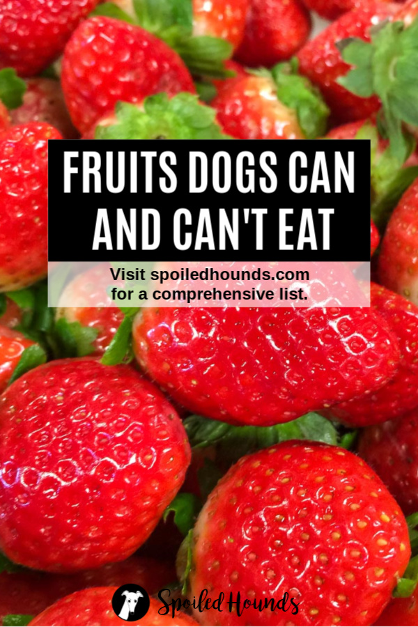 Strawberries with text overlay for fruits dogs can eat and can't eat.
