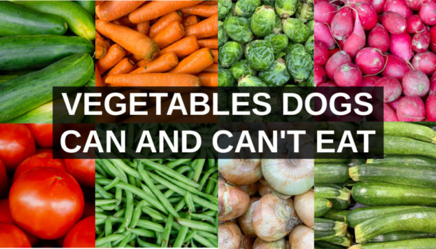 Collage of vegetables dogs can eat and can't eat.