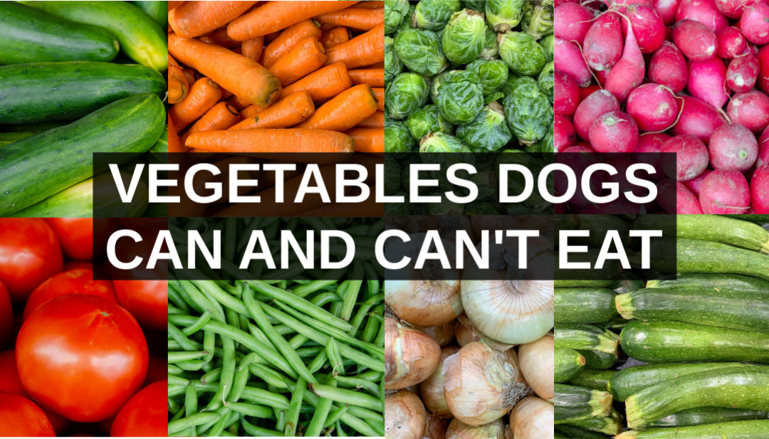 Vegetables Dogs Can Eat and Vegetables