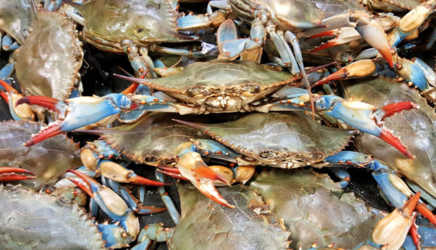 A bunch of live blue crab
