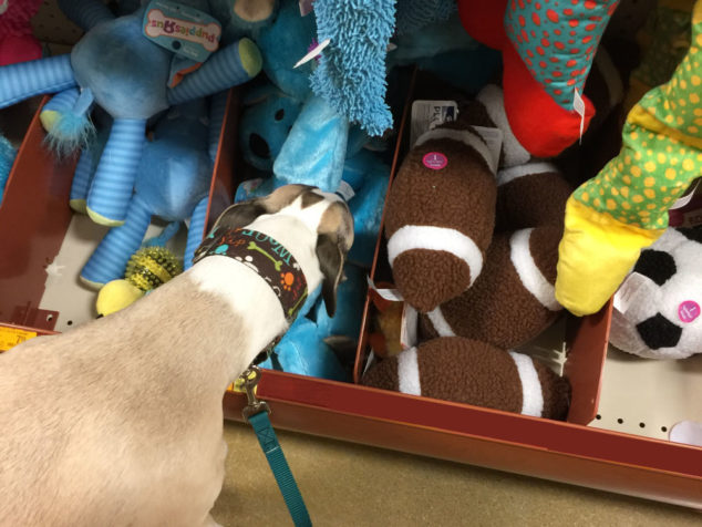 dog sniffing toys at a store