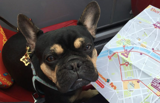 dog sitting next to a map of Paris