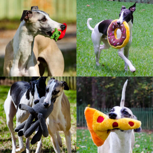 collage of dogs playing with toys