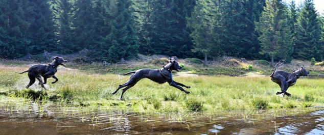 Great Dane dog running next to a river