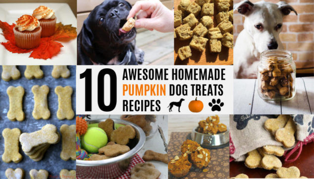 Collage of homemade pumpkin dog treats recipes