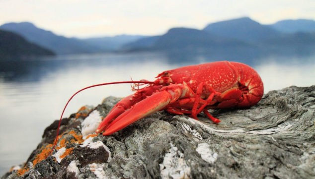 Lobster on a rock in front of the ocean