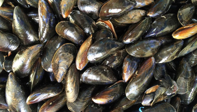 A bunch of mussels