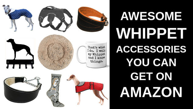 collage of whippet dog products and accessories on Amazon