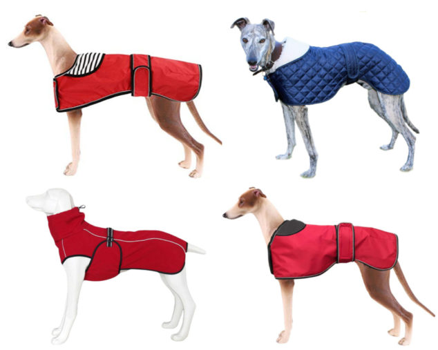 Collage of whippet dog coats