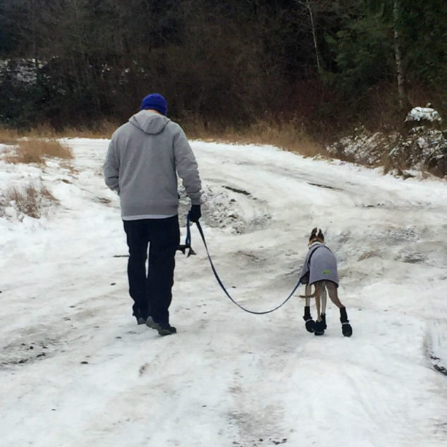 Man walking with a whippet in the snow.