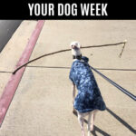 Dog walking and carring a stick in its mouth.